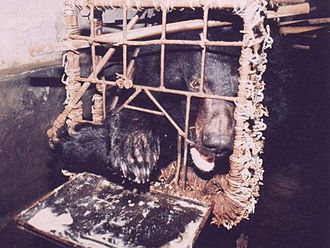 bile bear